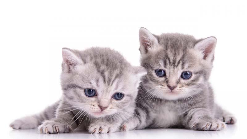 kotełki