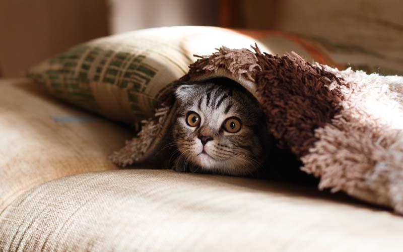 Niewydolność nerek u kota.