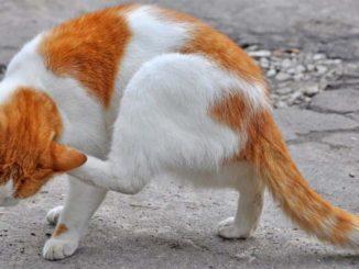 alergie kotów