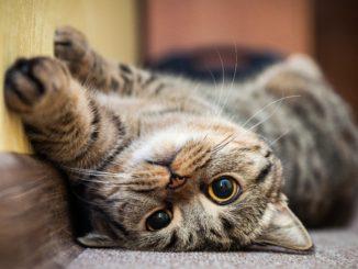 szczęśliwy kot