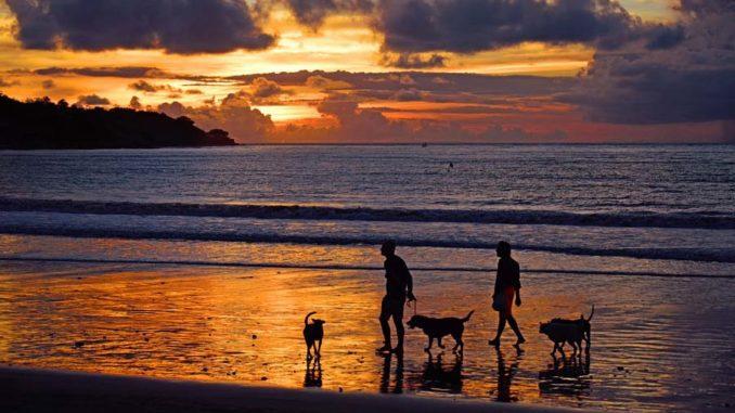 wakacje z psami i kotami