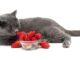 12 produktów, które są bezpieczne dla Twojego kota
