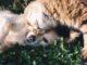 Sklep zoologiczny online