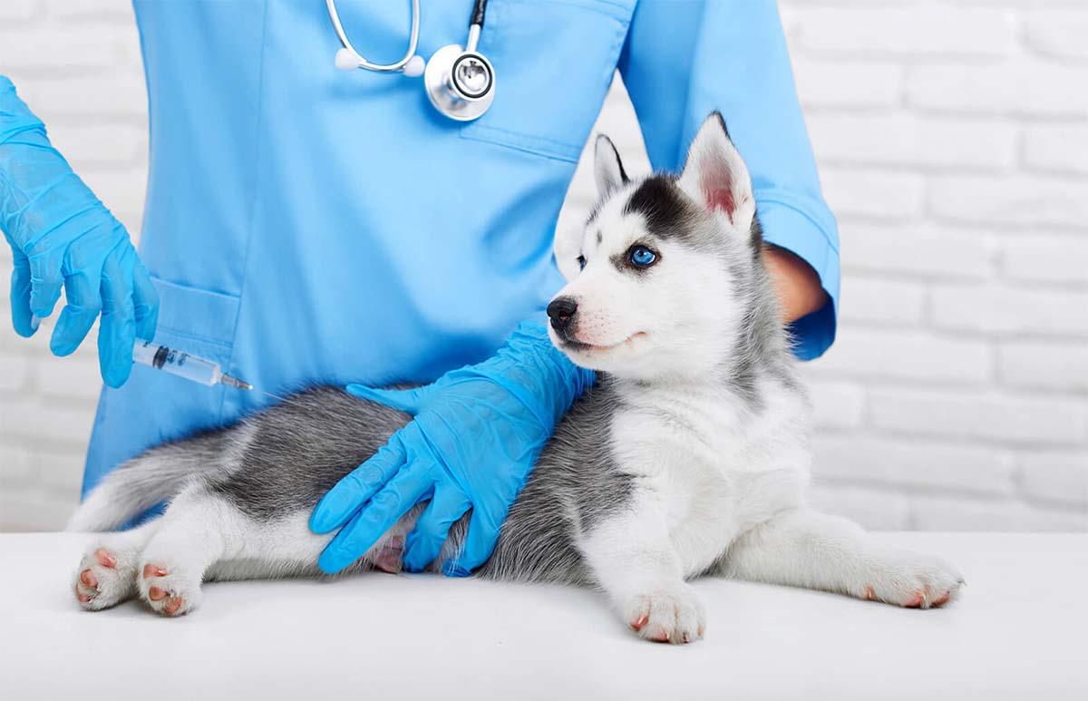 szczepienia psów harmonogram