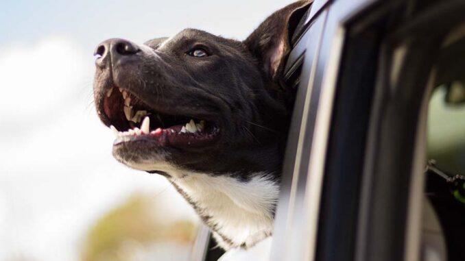 Choroby psich zębów