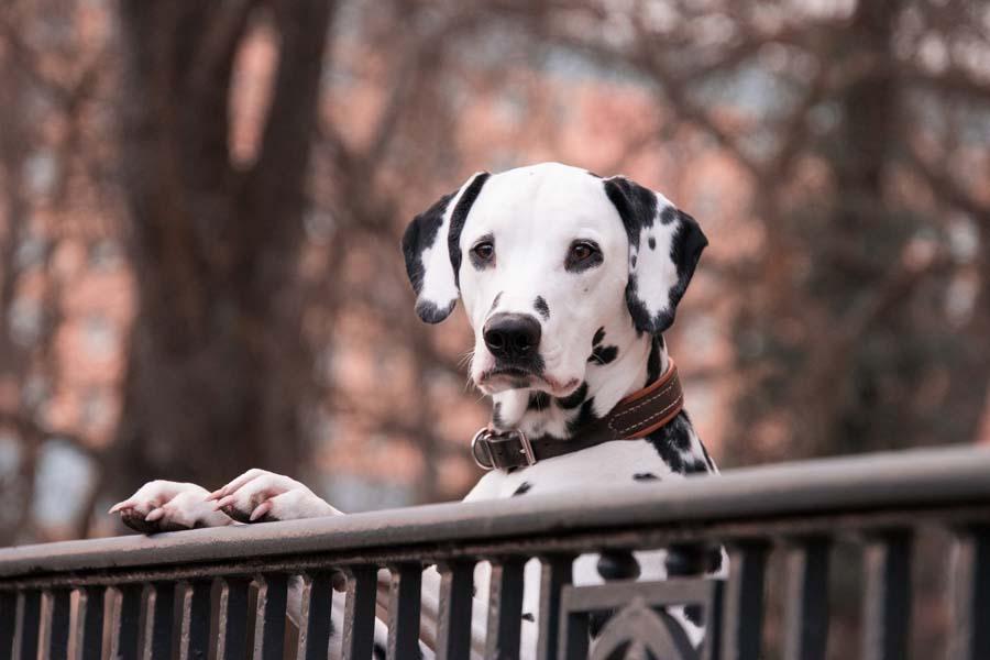 Jak wybrać dietetyczne przysmaki dla psa