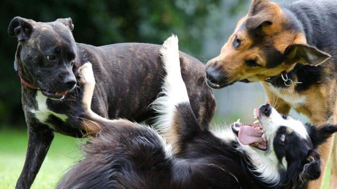 Najczęstsze problemy z uzębieniem u psów