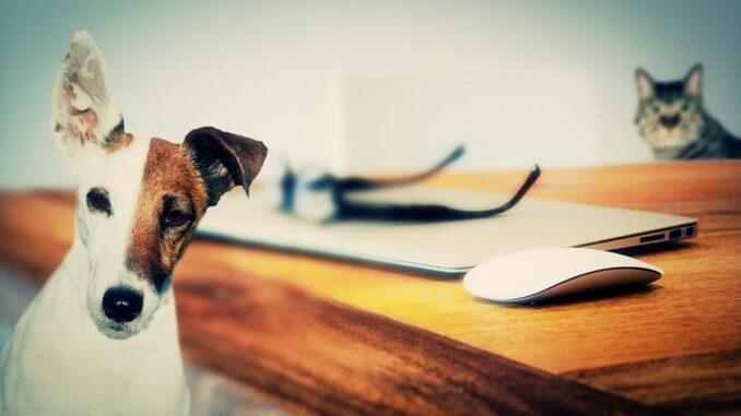 Przepis na szczęśliwe zwierzaki