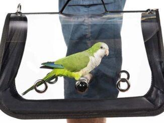 Transport ptaka