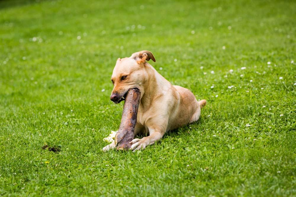 Zęby psa – dlaczego warto o nie zadbać
