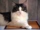Pielęgnacja sierści kota