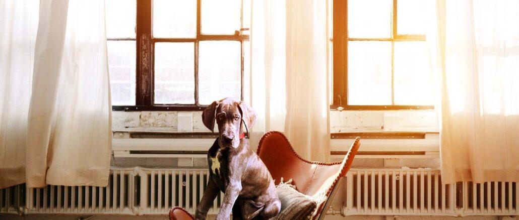 Zdolności komunikacyjne psów