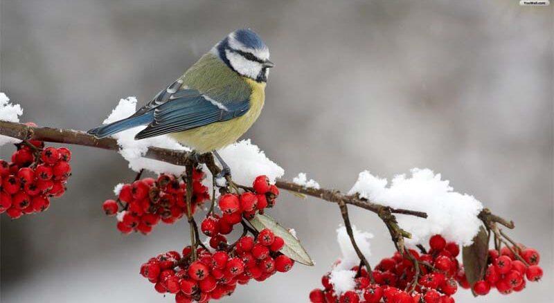 Jak pomóc ptakom w okresie zimowym