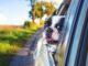 Jak zgodnie z przepisami przewieźć psa w samochodzie
