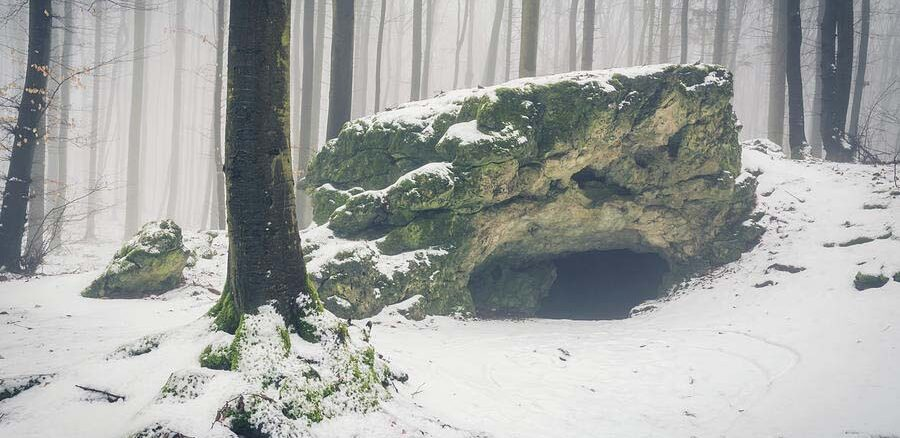 Sen zimowy zwierząt