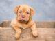 Szkolenie szczeniaka - jak nie sikać w domu