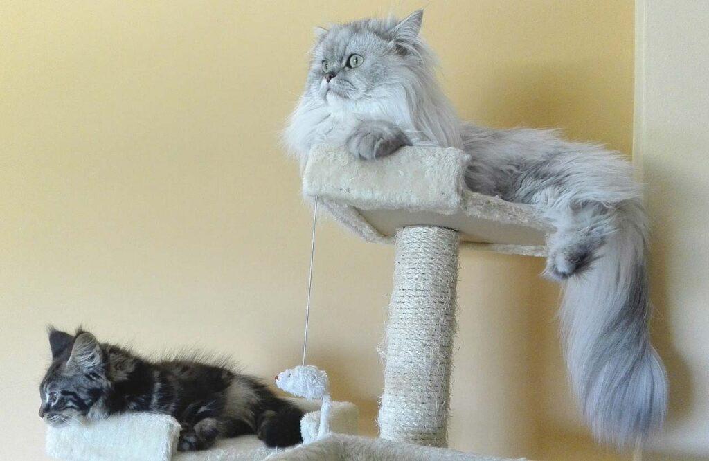 Jakie drapaki dla kotów są najlepsze