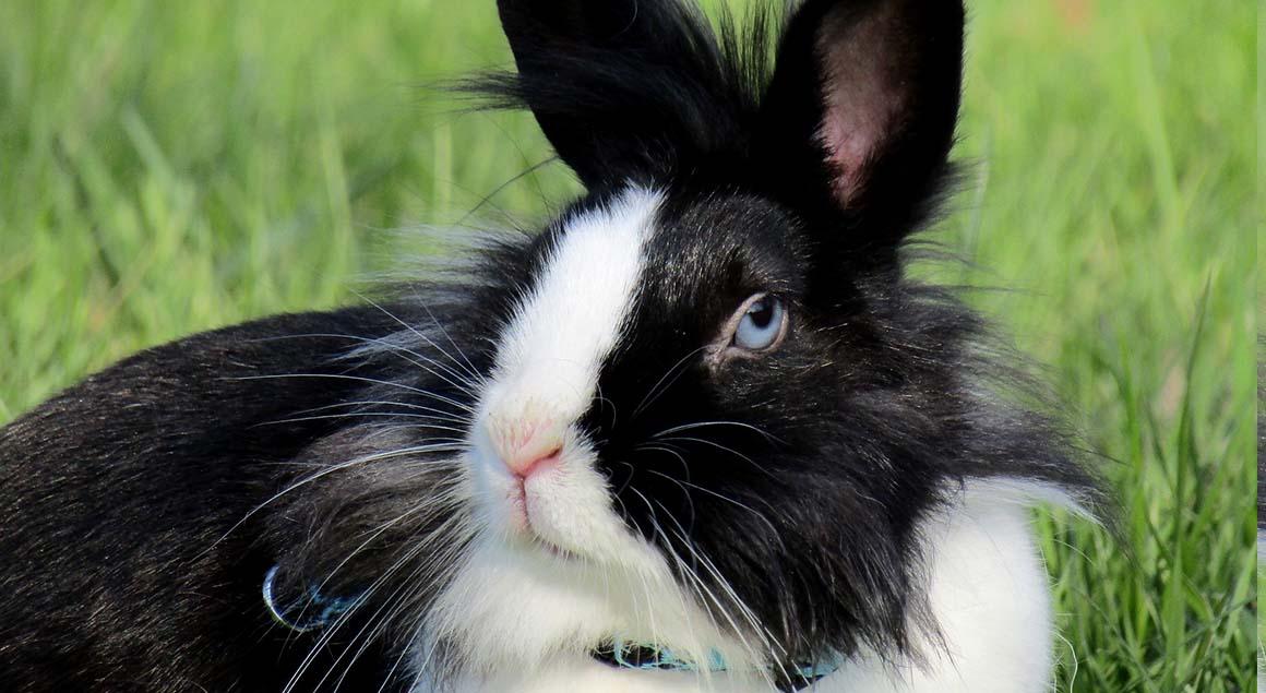 Choroby królików