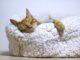rodzaje legowisk dla kota