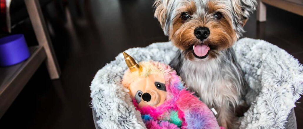 Zadbaj o psi komfort